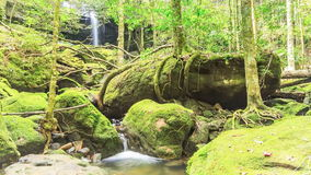 Timelapse : Beautiful waterfall in forest, Thailand. stock video footage