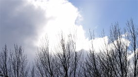 Timelapse big clouds drifting behind trees. Timelapse of clouds drifting by sun behind trees moved by wind stock video
