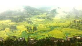 Canola Field with Mist in the Morning at Luoping, China. Timelapse of Canola field, rapeseed flower field with morning fog at Luoping, China stock video