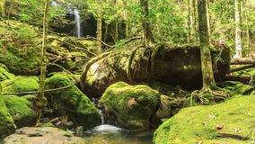 Timelapse: Cascada hermosa en el bosque, Tailandia. almacen de metraje de vídeo