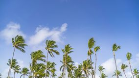 Timelapse of clouds in a blue sky over palm trees in Dominican Republic stock video
