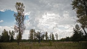 Timelapse clouds over the meadow and trees. Wide angle stock footage