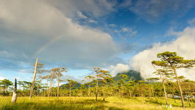 Timelapse, cloudscape and rainbow after rain in rainforest, Thailand. stock footage