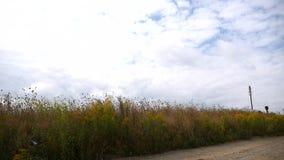 Timelapse com as nuvens que movem-se sobre o campo amarelo vídeos de arquivo