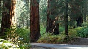 Timelapse com nuvens e n?voa nas montanhas no parque nacional de sequoia, 4K video estoque