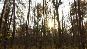 Timelapse con la gru, bella foresta di autunno al tramonto archivi video