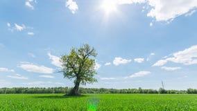 Timelapse da paisagem de uma árvore só filme