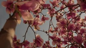 Timelapse das flores na primavera está florescendo vídeos de arquivo