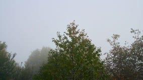 Timelapse das nuvens sobre a floresta verde grossa UHD video estoque