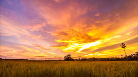 Timelapse Day To Night At Rice Field Royalty Free Stock Image