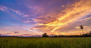 Day to Night With Colorful Sky Over Rice Field. Timelapse day to night with colorful sky over rice field at Songkhla,Thailand stock footage
