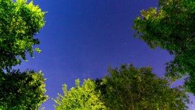 Timelapse de ciel nocturne d'Ardennes banque de vidéos