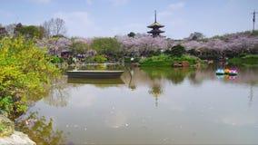 Timelapse de jardin est de fleurs de cerisier de lac wuhan banque de vidéos