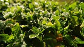 Timelapse de la hierba y de las hojas congeladas en la salida del sol metrajes