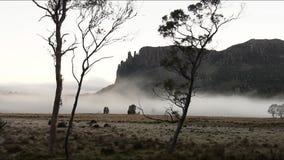 Timelapse de la niebla de la madrugada almacen de metraje de vídeo