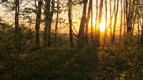 Timelapse de la salida del sol del bosque El tiempo de primavera… subió las hojas, fondo natural almacen de metraje de vídeo