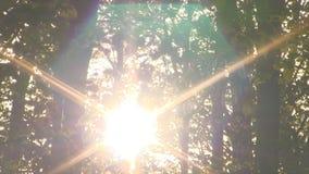 Timelapse de la salida del sol del bosque El tiempo de primavera… subió las hojas, fondo natural metrajes