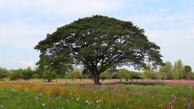 Timelapse de muchos turistas visita el árbol de lluvia grande en campo de flor metrajes