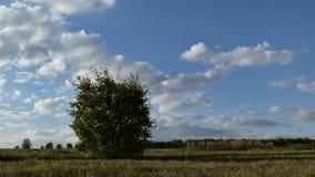 Timelapse de nubes y del cielo azul almacen de metraje de vídeo