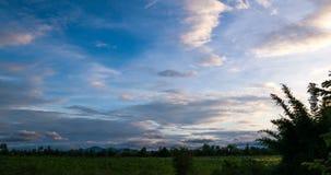 Timelapse de passar nuvens sobre a árvore e o campo na noite video estoque