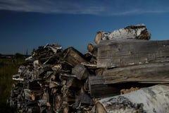 Timelapse de Polenitsa de madera de abedul metrajes
