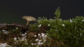 Timelapse de um cogumelo vídeos de arquivo