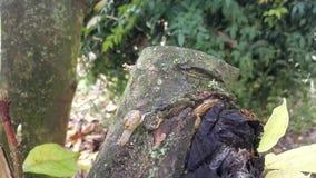 Timelapse de un caracol nuevamente nacido de algunas semanas que diapositivas en la corteza de un árbol de la magnolia metrajes