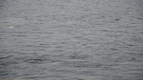 Timelapse de un cierre para arriba de la precipitación de las ondas del río del invierno almacen de video