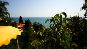 Timelapse del mar agita en el golfo de Yalta con el árbol metrajes