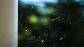 Timelapse del web de araña metrajes