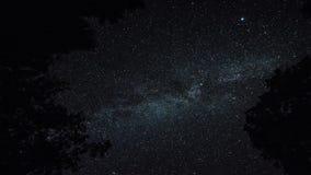 Timelapse delle stelle sopra gli alberi alla notte di estate poi si appanna la venuta sul cielo scuro stock footage