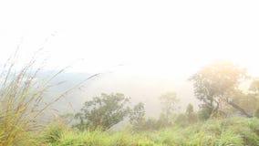 Timelapse des nebeligen Sonnenaufgangs auf der kleinen des Adams Spitze in Ella, Sri Lanka stock footage