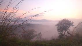 Timelapse des nebeligen Sonnenaufgangs auf der kleinen des Adams Spitze in Ella, Sri Lanka stock video