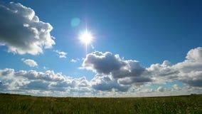 Timelapse do campo da grama verde e do céu perfeito Campo do dente-de-leão, céu azul e sol Campo verde, céu azul e sol video estoque