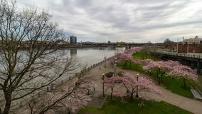 Timelapse in downtown Portland Or with cherry blossom trees spring season 4k uhd. Time lapse movie of auto and foot traffic with clouds movement in downtown stock video footage