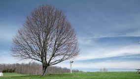Timelapse ensamt träd med molnig blå himmel arkivfilmer