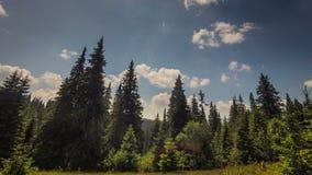 Timelapse fördunklar över det gröna fältet Full HD Fotografering för Bildbyråer