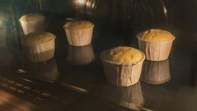 Timelapse of five cupcakes in white cake molds baking inside of oven. Timelpase of whole process of handmade delicious cupcakes muffin baking in oven stock footage