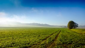 Timelapse fog over a field 2 stock video footage