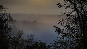 Timelapse of foggy valley with trees stock video