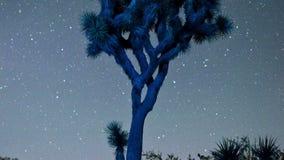 Timelapse gra główna rolę przędzalnictwo nad Joshua drzewem zbiory wideo