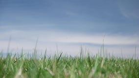 Timelapse-Gras mit bewölktem blauem Himmel stock video