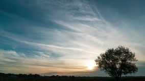 Timelapse of a growing tree on field with dramatic sunset sky. In the background stock footage