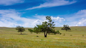 Timelapse of an idyllic landscape. Three trees in the field, blue sky and clouds stock video