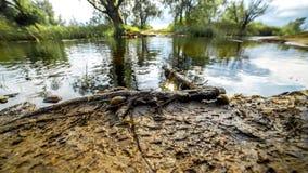 Timelapse intéressant sur un glisseur près d'un beau lac et escargots qui rampent à l'eau banque de vidéos