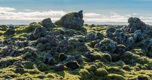 Timelapse islandés del ambiente del musgo que desliza el vídeo almacen de video