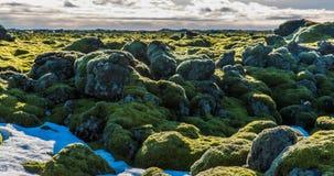 Timelapse islandés del ambiente del musgo que desliza el vídeo almacen de metraje de vídeo