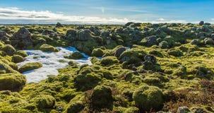 Timelapse islandais d'environnement de mousse glissant la vidéo banque de vidéos