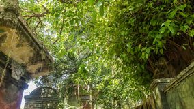 timelapse 4K da floresta tropical tropical na ilha de Bali, Indonésia Lapso de tempo verde video estoque