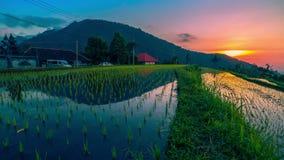 timelapse 4K Sonnenuntergang über den Reisfeldern reflektierte sich im Wasser 15. Juli 2015 Bali, Indonesien stock footage